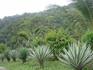 растительность острова