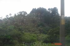 Далее наш путь лежал в Куритибу. От Сан-Паулу 6 часов езды на автобусе