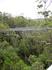 Tree Top Walk в Долине Гигантов