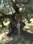 В оливковой роще!