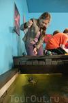 Ловля крабов на креветку в Атлантическом парке Олесунна.