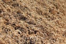 Ракушки в горных породах оазиса Шебика, Тунисцы говорят, что возможно когда-то здесь было много воды (море, озеро или река)...