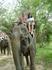 22 декабря 2010. Квай. Elephant Rides.