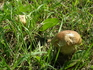 У нас так много грибов....