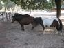 животные, обитающие в Parco Naturale