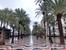 А справа начинается Paseo Explanada De España, прогулочная зона вдоль моря с пальмами, кафешками и красивейшей концертной площадкой в виде раковины.