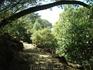 Monchique s evcaliptovimi lesami