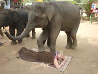 Слоновый массаж в слоновой деревне