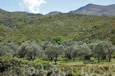 Греки говорят, что оливки и оливковое масло самые вкусные именно в Греции (наверно так говорят жители всех стран, где производят оливковое масло)