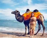 Верблюд и море