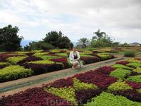 Ботанический сад и цветочный ковер