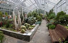 В правом крыле оранжереи растут кактусы и суккуленты.