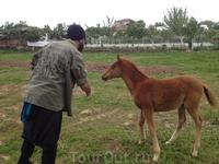 Жеребенок на конной ферме рядом со Стамбулом