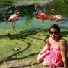 Доминикана. Территория отель Натур парк. Розовый фламинго.