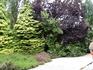 отцвели уж давно хризантемы в саду..... хотя еще был только август.