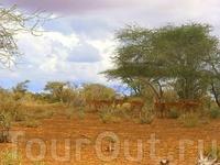 Целое стадо антилоп Импала