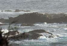 Сегодня этот мыс все еще является домом для колонии калифорнийских морских львов, а временами и для тюленей. После организации заповедника здесь несколько ...