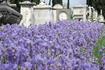 Старое кладбище Флоренции