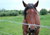 Бельгия. У Дамме. Похоже голодная лошадка. Принеслась сразу как только увидела нас. Так что если будете в тех краях, захватите хлеба)))