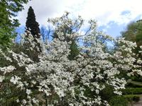 Это территория террасы Квадратов. Здесь растут фруктовые деревья, лекарственные травы, восточные растения. Территория как-бы расчерчена на квадраты при ...