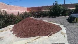 Фабрика по переработке аргановых орехов и получения из них арганового масла.