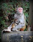 В Китае в парках много обезьян. Об этом предупреждают туристов информационные щиты.