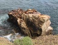На пляже в Ла-Хойя есть несколько скал, где греются на солнышке и мирно посапывают морские котики.