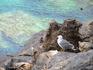 чайка бухты Са-Калобра