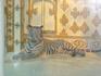 """Фантазия"" белая комната тигры альбиносы"
