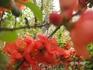 цветы на улицах Кисловодска