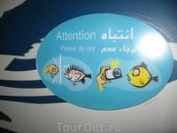 Вот такие знаки рассказывали, чего не стоит делать возле аквариумов.