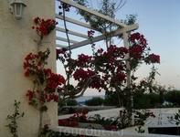 там цветут даже старые коряги))) очень всем рекомендую съездить)))