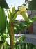 Вот такое растение росло у нашей гостиницы на ул.Октябрьской