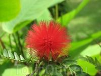 Тропические цветы в ботаническом саду