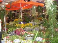 на рынке цветов в Амстердаме