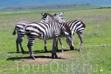 В Танзании, конечно, много всего интересного, но так как время моего путешествия было ограничено, то удалось посетить только национальный парк Нгоронгоро ...