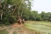 Читван. Прогулка по джунглям на слонах