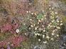Такие цветики там произрастают