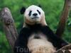 Фотография Пекинский зоопарк