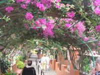 Во время экскурсионной поездки на вулкан Тейде остановились на обед в  небольшом кафе. Обед был прекрасный, вино лилось рекой.