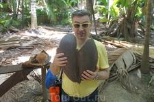 А вот и настоящая скорлупка от коко-де-мер. Средний вес такого ореха около 20 кг. Скорлупа весит немного меньше.