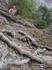Дорога к Царскому пляжу идёт по можжевеловой роще, расположенной в расщелине между скал