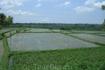 Бали/ Рисовые поля