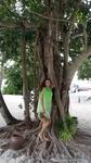 дерево в центре острова