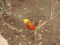 Парк Птичий лес