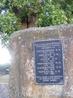 Табличка рядом с тюльпаноым деревом
