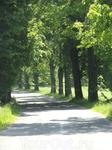 Дороги Калининградской области.Деревья посажены немцами.
