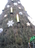 Главная елка в Дортмунде состоит из десятков тысяч настоящих елок.