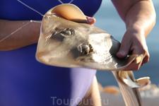 успешная рыбалочка. Оманский залив
