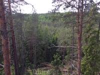 Вид на лес со смотровой вышки.